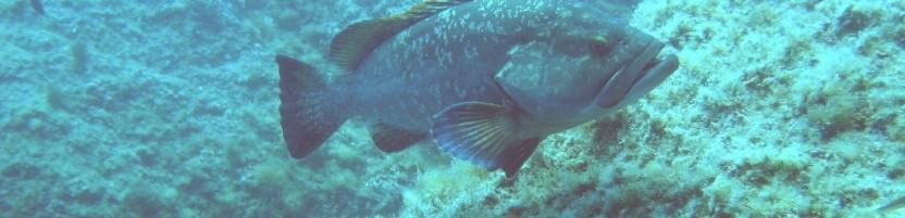Les habitants subaquatiques du Parc National des Calanques