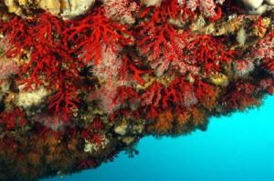 corail-calanques